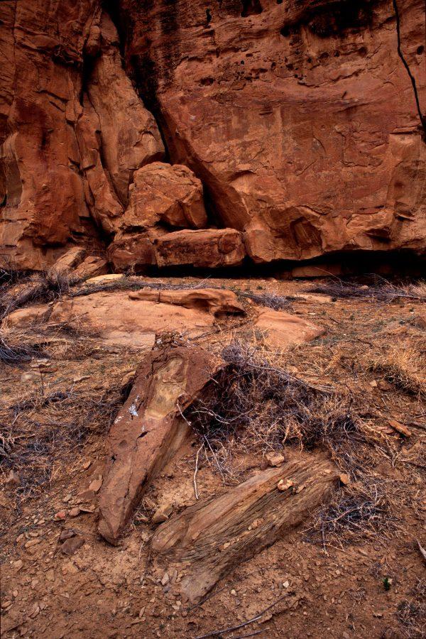Petrified Wood, Chaco Canyon, NM