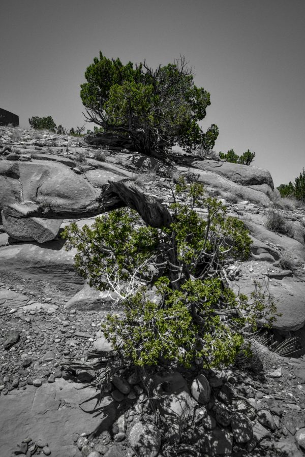 High and Low Junipers 2, Abiquiu, New Mexico