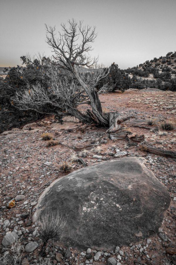 Outcrop and Juniper 3, Abiquiu, New Mexico