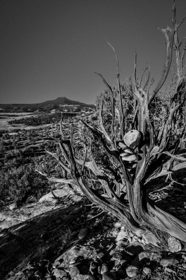 Rocks in Juniper 3, Abiquiu, New Mexico