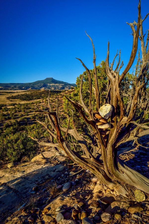 Rocks in Juniper 4, Abiquiu, New Mexico
