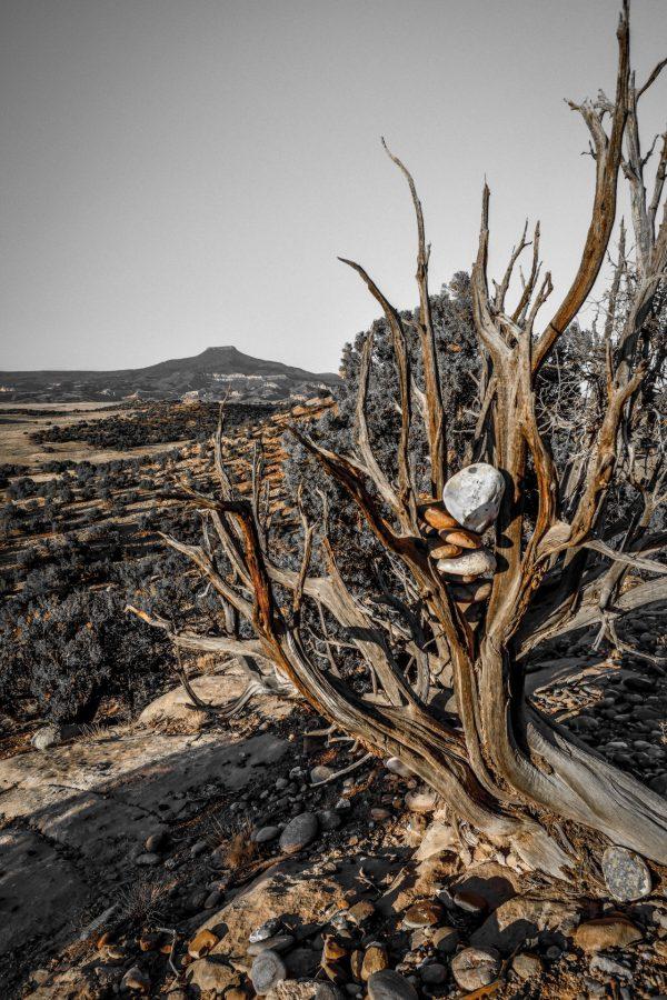 Rocks in Juniper 5, Abiquiu, New Mexico