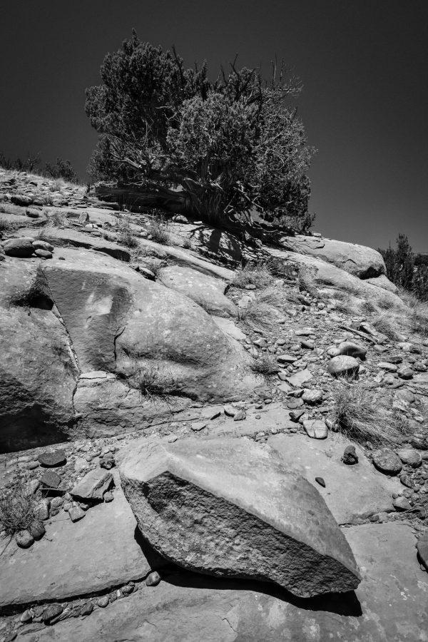 Straight Edge Boulder and Juniper, Abiquiu, New Mexico