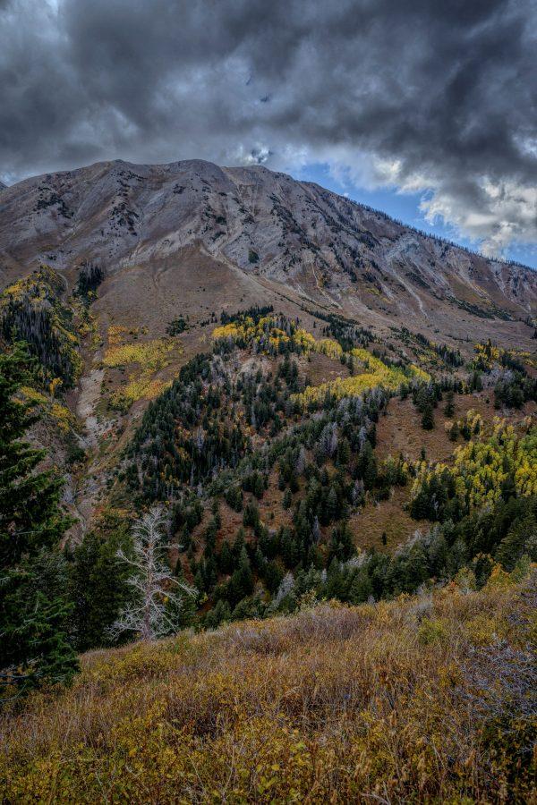 Bare Among the Evergreens, Santaquin, Utah