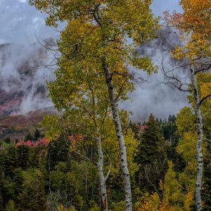 Clouds Among the Aspens, Santaquin, Utah