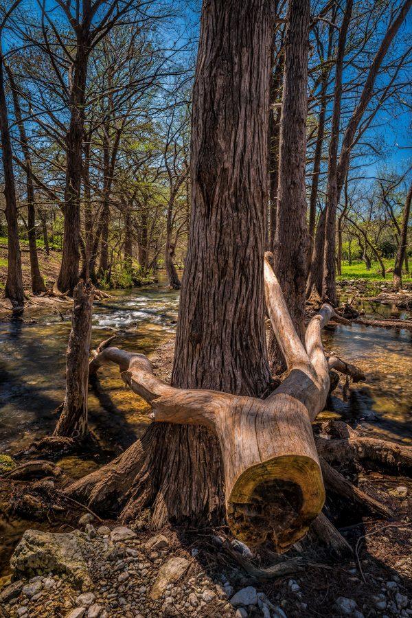 Cypress Creek After the Rains, Wimberley, Texas #3
