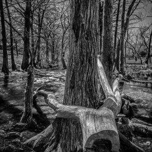 Cypress Creek After the Rains, Wimberley, Texas #4