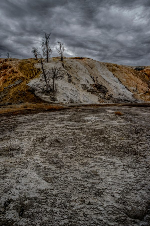 Dead Trees in Mammoth Hot Springs, Yellowstone National Park, Wyoming