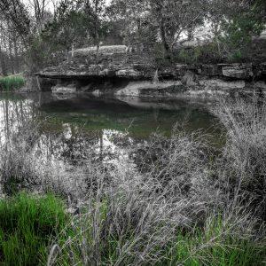 Early Morning on Smith Creek, Wimberley, Texas #12