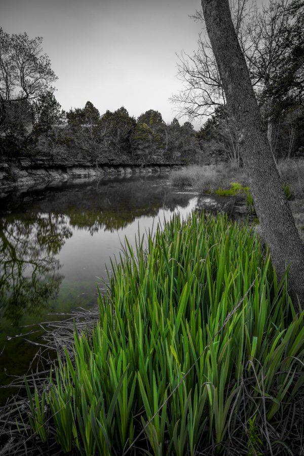 Early Morning on Smith Creek, Wimberley, Texas #5