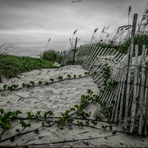 Fence on the Dunes 10, Padre Island, Texas
