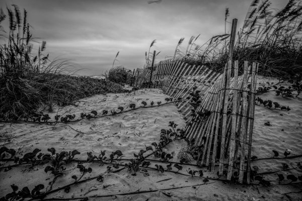 Fence on the Dunes 11, Padre Island, Texas