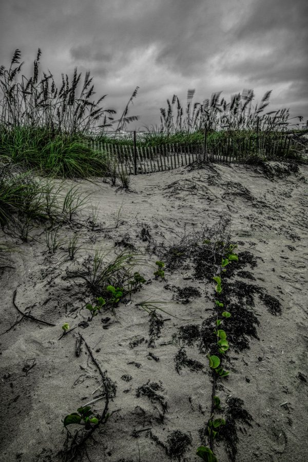 Fence on the Dunes 2, Padre Island, Texas