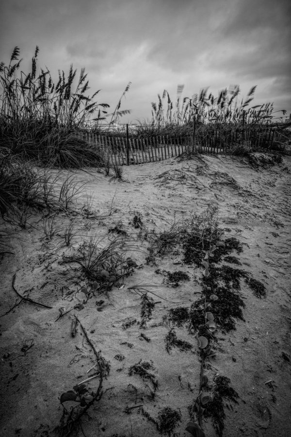 Fence on the Dunes 3, Padre Island, Texas