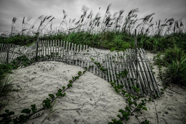 Fence on the Dunes 7, Padre Island, Texas