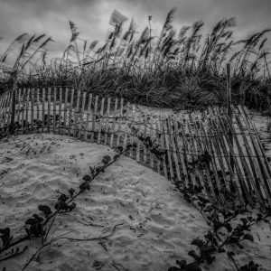 Fence on the Dunes 8, Padre Island, Texas