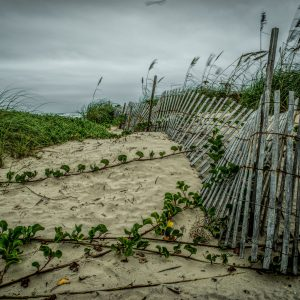 Fence on the Dunes 9, Padre Island, Texas