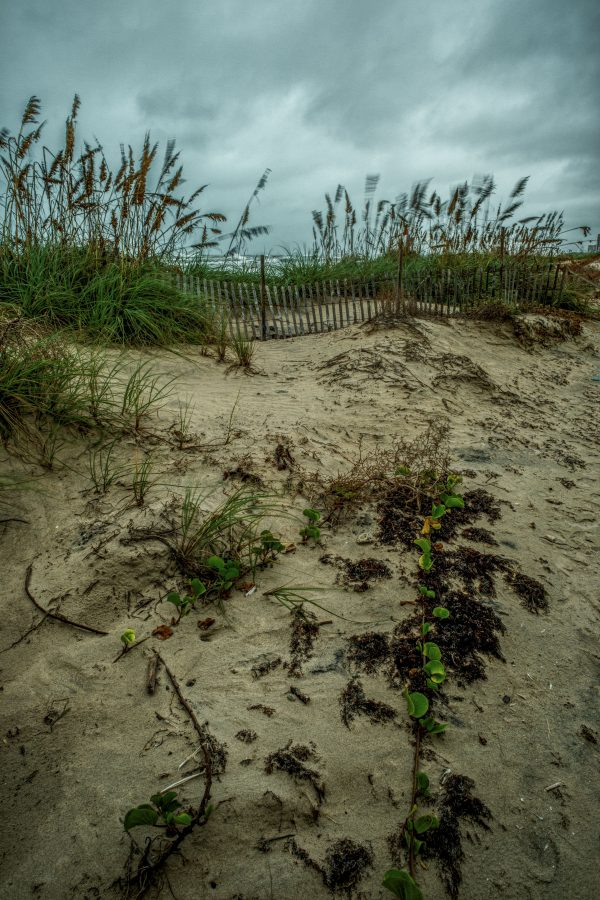 Fence on the Dunes, Padre Island, Texas