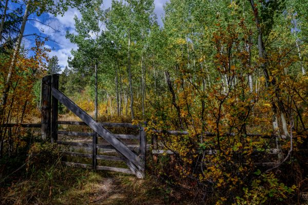 Gate in the Woods, Wilson, Wyoming