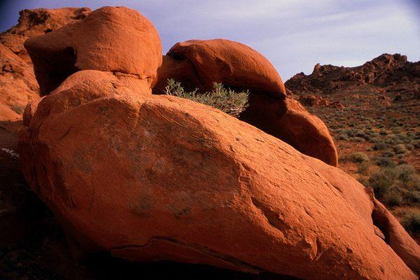 Juniper in the Rocks, Valley of Fire, Nevada