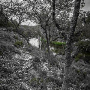 Morning Scene on Smith Creek, Wimberley, Texas