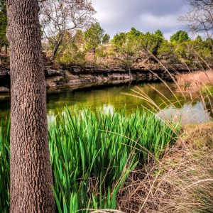 Morning on Smith Creek, Wimberley, Texas #12