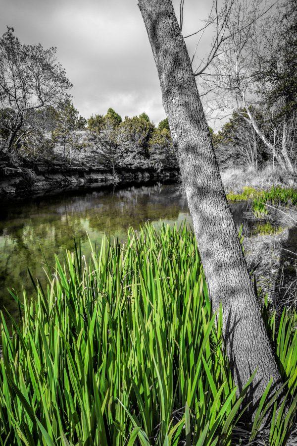 Morning on Smith Creek, Wimberley, Texas #15