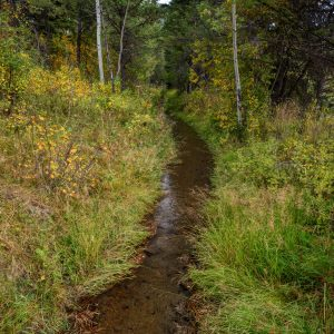 Natural Irrigation Stream in the Woods, Wilson, Wyoming
