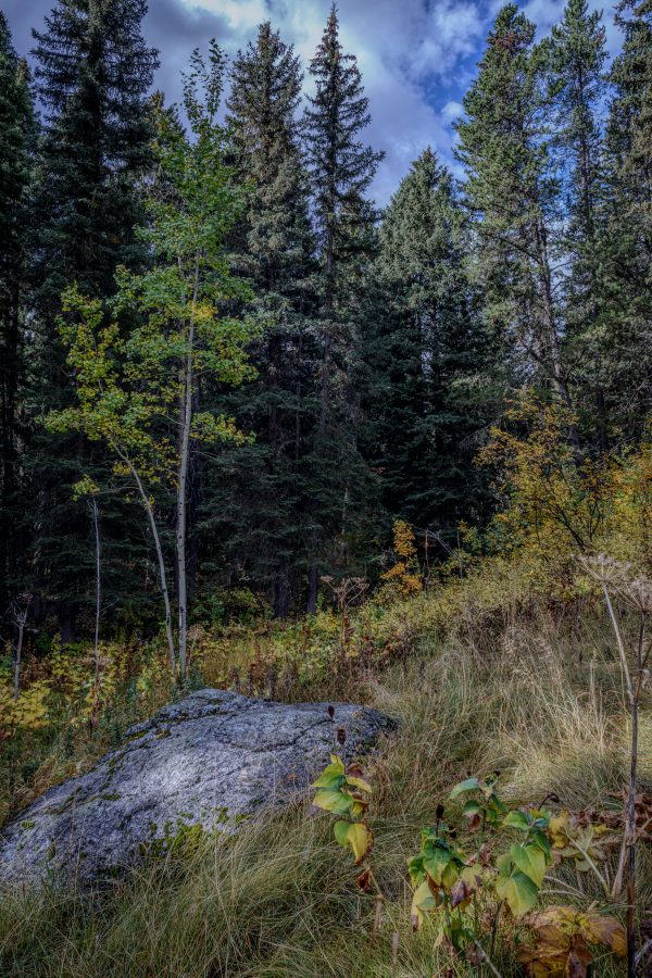 Outcrop in the Woods, Wilson, Wyoming