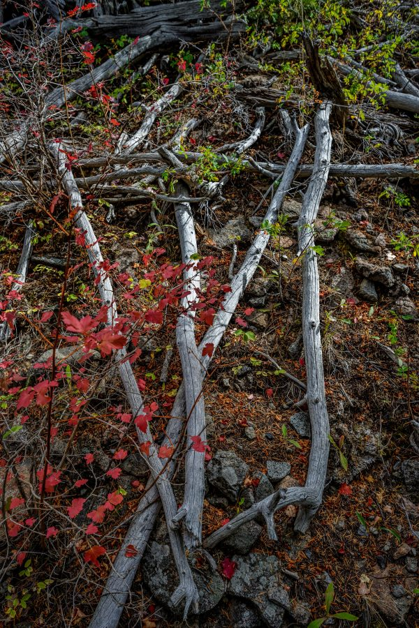 Sticks and Red Maple Leaves, Pray, Montana_