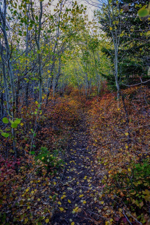 Trail of Fall Colors Near Pray , Montana_