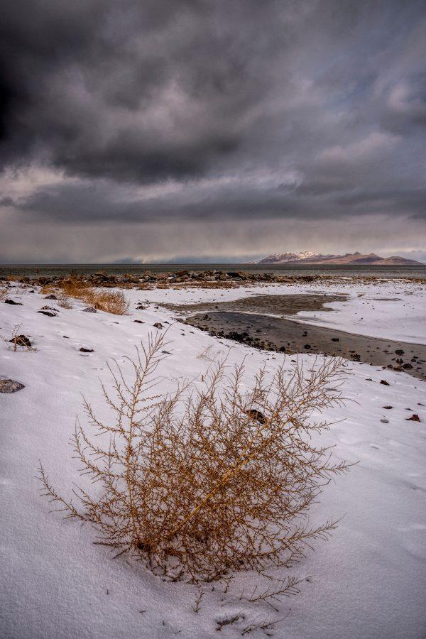 Winter Shore, Great Salt Lake, Utah