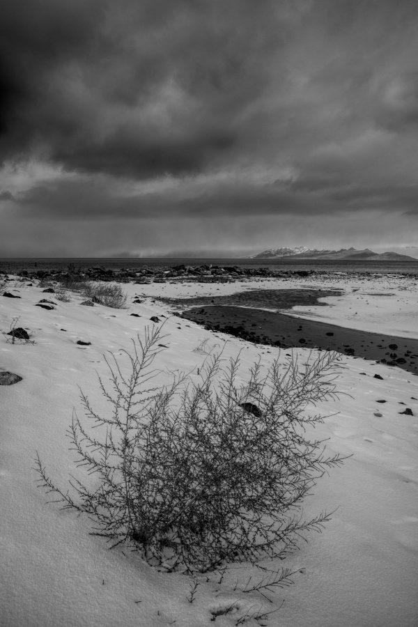 Winter Shore, Great Salt Lake, Utah (bw)