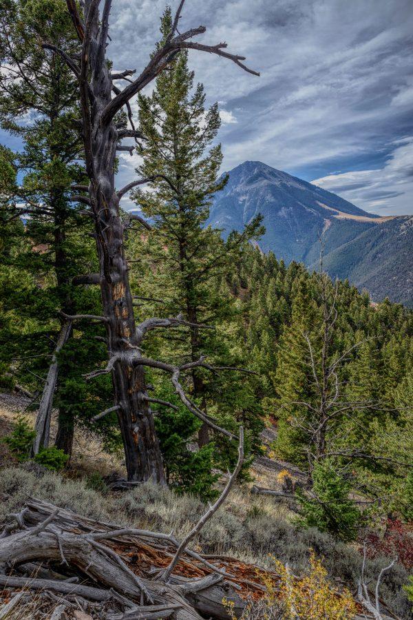 Woods on the Mountainside, Pray, Montana_