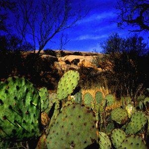 Prickly Pears, Enchanted Rock, Texas